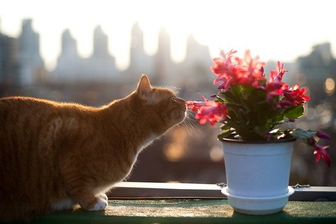 cat-2768542_640