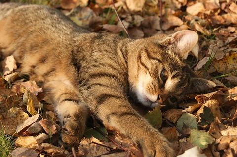 cat-1713960_640
