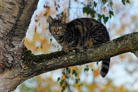 cat-3763274_640