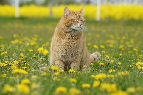cat-5207379_640
