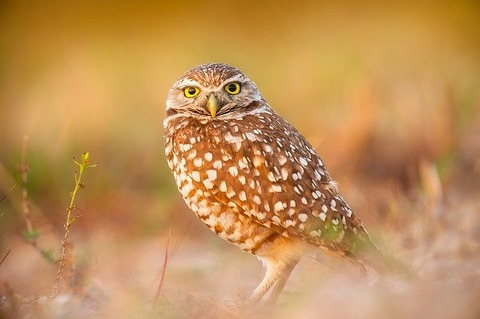 owl-2209827_640