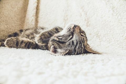 cat-2607051_640