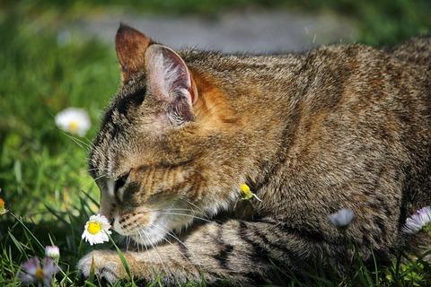 cat-4218434_640