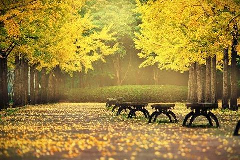 autumn-leaves-4522102_640 (1)
