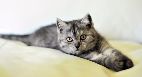 cat-3431537_640 (1)