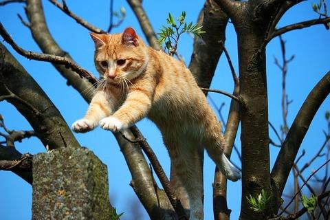 cat-1366118_640
