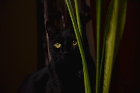 cat-2388207_640