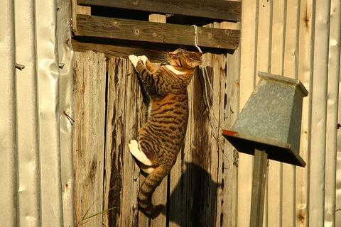 cat-1079581_640