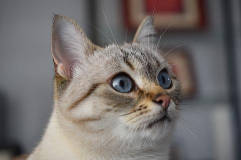 cat-4214423_640