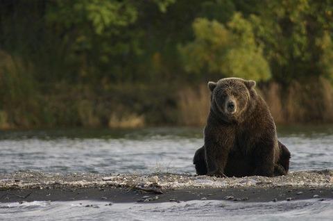 bear-2095379_640