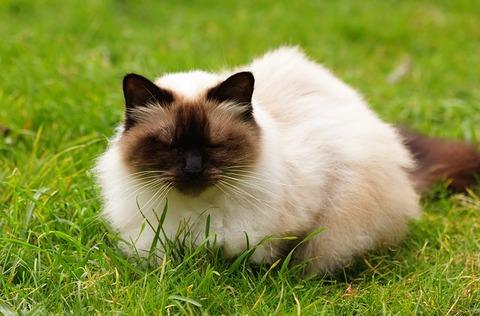 cat-1353029_640