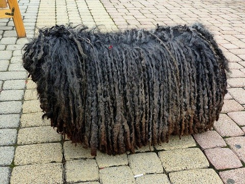 dog-1619386_640