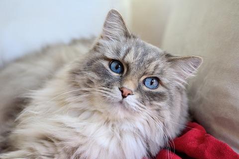 cat-620030_640