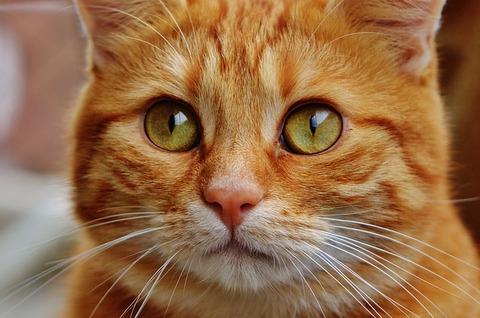cat-1044787_640