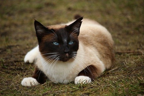 cat-1234955_640