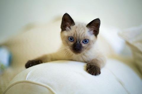 cute-3252251_640