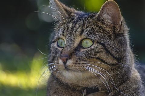 cat-1814007_640