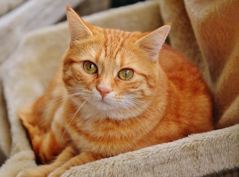 cat-1044755_640