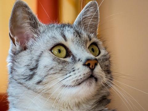 cat-1718998_640