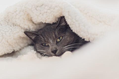 cat-3841448_640