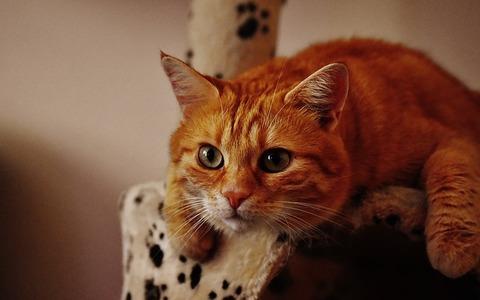 cat-1692702_640 (1)