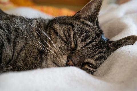 cat-648136_640