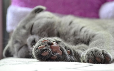 cats-paw-2288769_640