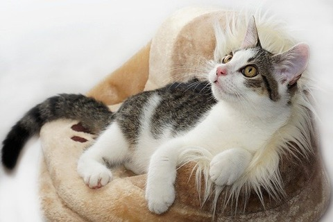cat-4081971_640