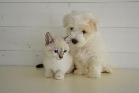 dog-cat-2520041_640