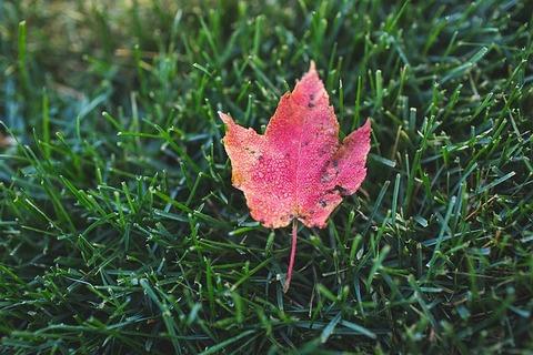 autumn-1246856_640