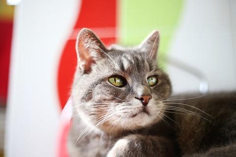 cat-3665859_640