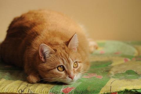 cat-4351651_640
