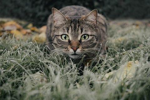 cat-5778777_640
