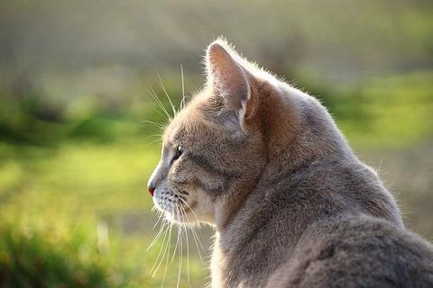 cat-1106857_640