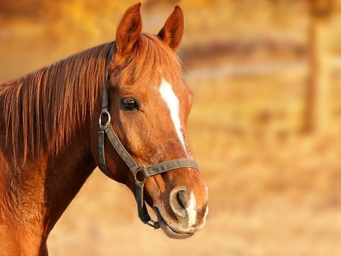 horse-1201143_640