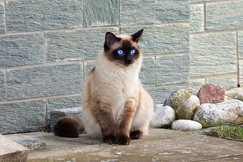 cat-2120915_640