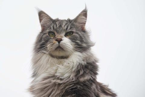cat-75088_640