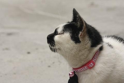 cat-2356258_640