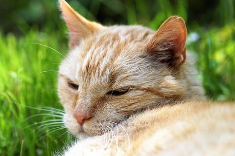 cat-4236237_640