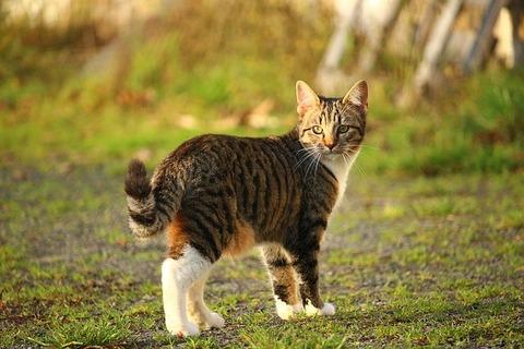 cat-1074729_640