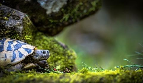 turtle-3340266_640