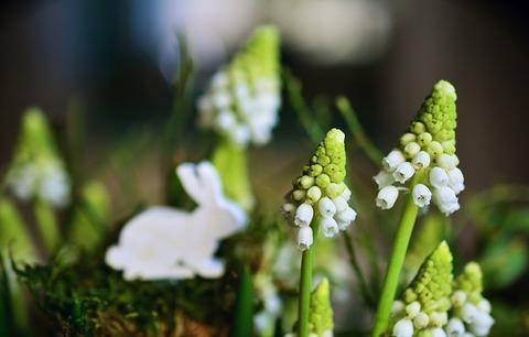 hyacinth-3220220_640