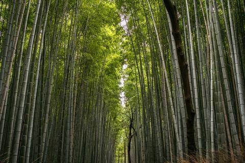 bamboo-3870863_640