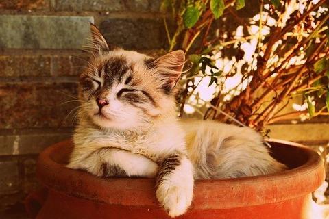kitten-asleep-in-a-pot-1995961_640 (1)