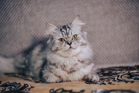cat-5031738_640