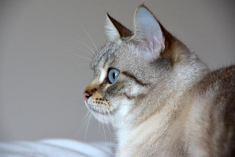 cat-4098171_640
