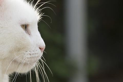 cat-1826117_640