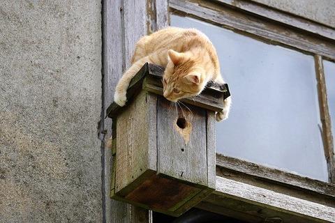 cat-1400812_640