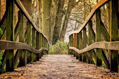 探偵ナイトスクープ「どこにも繋がっていない謎の橋」回が話題!反応まとめ【向谷橋】