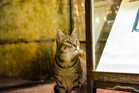 cat-3097768_640